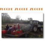 ZUCCHE X SITO