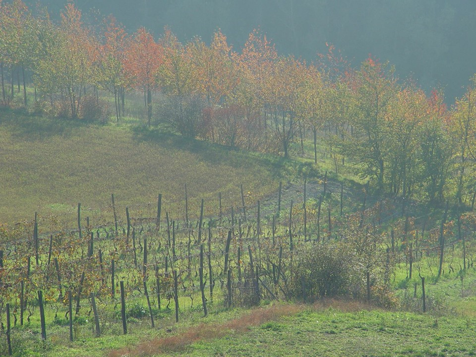 3 Novembre Escursione Foliage di novembre