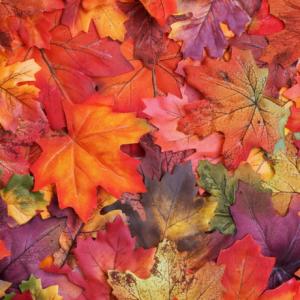 26 Ottobre TREKKING del Foliage di Autunno